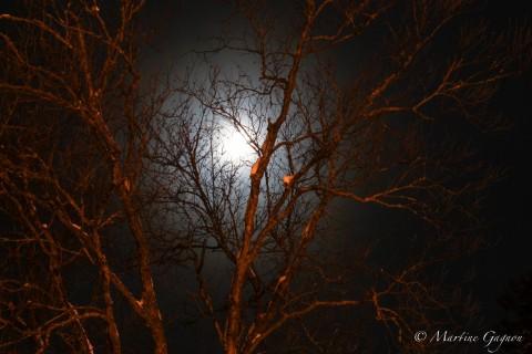 Soirée du 10 Février – Retour sur photo de nuit & Solutions de sauvegarde